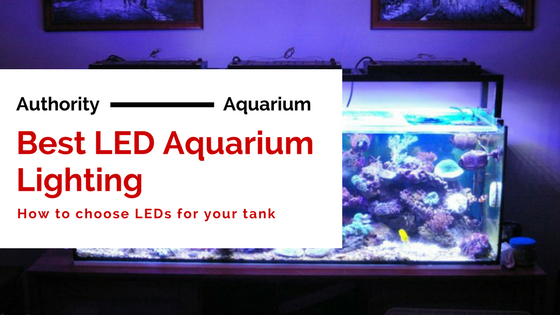 best led aquarium lighting an expert 2018 guide authority aquarium