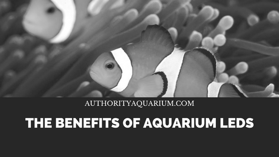 benefits of aquarium LED lighting