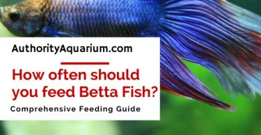 Best led aquarium lighting an expert 2018 guide for How often to feed fish