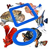 Zvaiuk Fish Feeding Ring, ABS Material Floating Food Feeder, Aquarium Fish Tank Fish Food Feeder Circle, for Guppy, bettas,Goldfish and Turtle (Square and Round) (Ordinary)