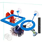 2 Pcs Fish Feeding Ring, Fish Safe Floating Food Feeder Circle Blue, with Suction Cup Easy to Install Aquarium, Square and Round Shape Fish Tank Towels - for Guppy, Betta, Goldfish, Etc. (Blue)