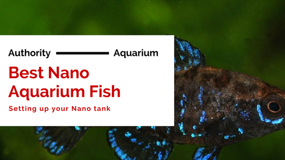 Best nano Aquarium fish