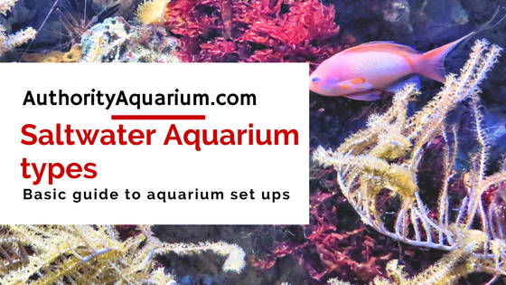 Saltwater Aquarium types