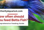 how often should you feed a betta fish