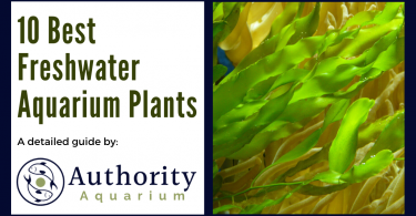 10 Best Freshwater Aquarium Plants
