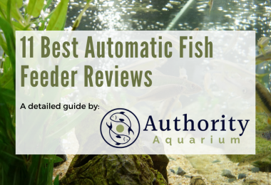 11 Best Automatic Fish Feeder
