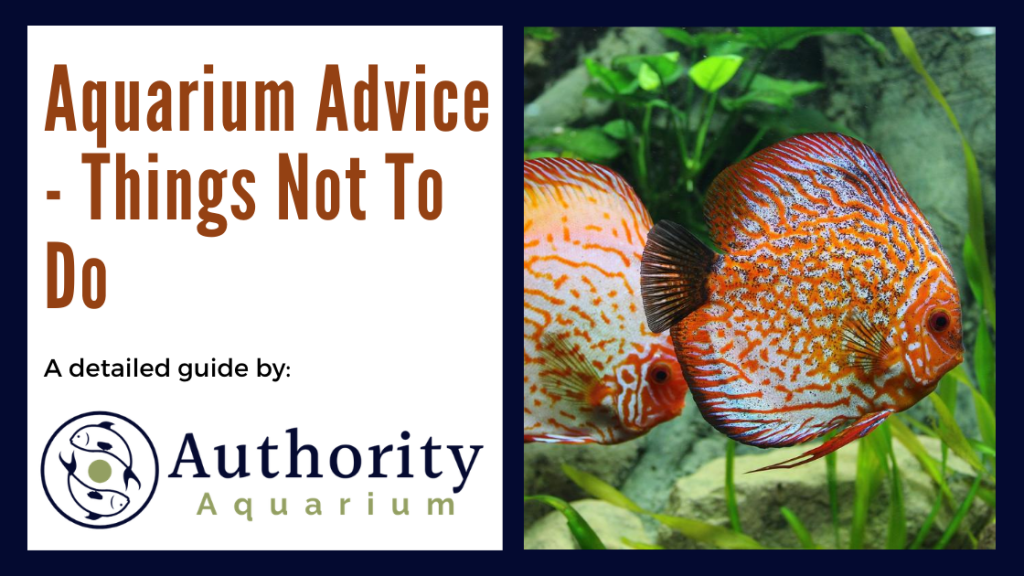 Aquarium Advice - Things Not To Do