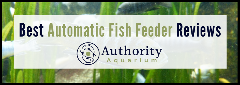 Best Automatic Fish Feeder Reviews