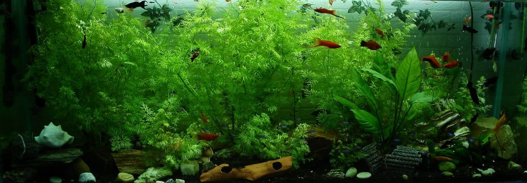 Best automatic fish feeders