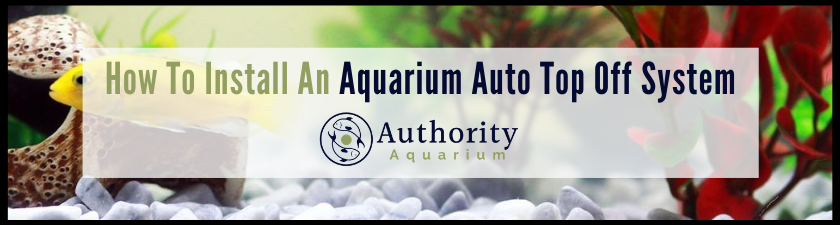How To Install An Aquarium Auto Top Off System