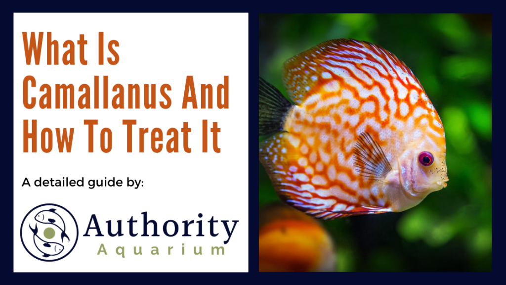What Is Camallanus And How To Treat It