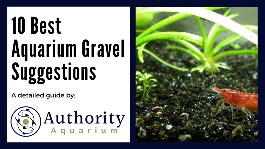 10 Best Aquarium Gravel Suggestions