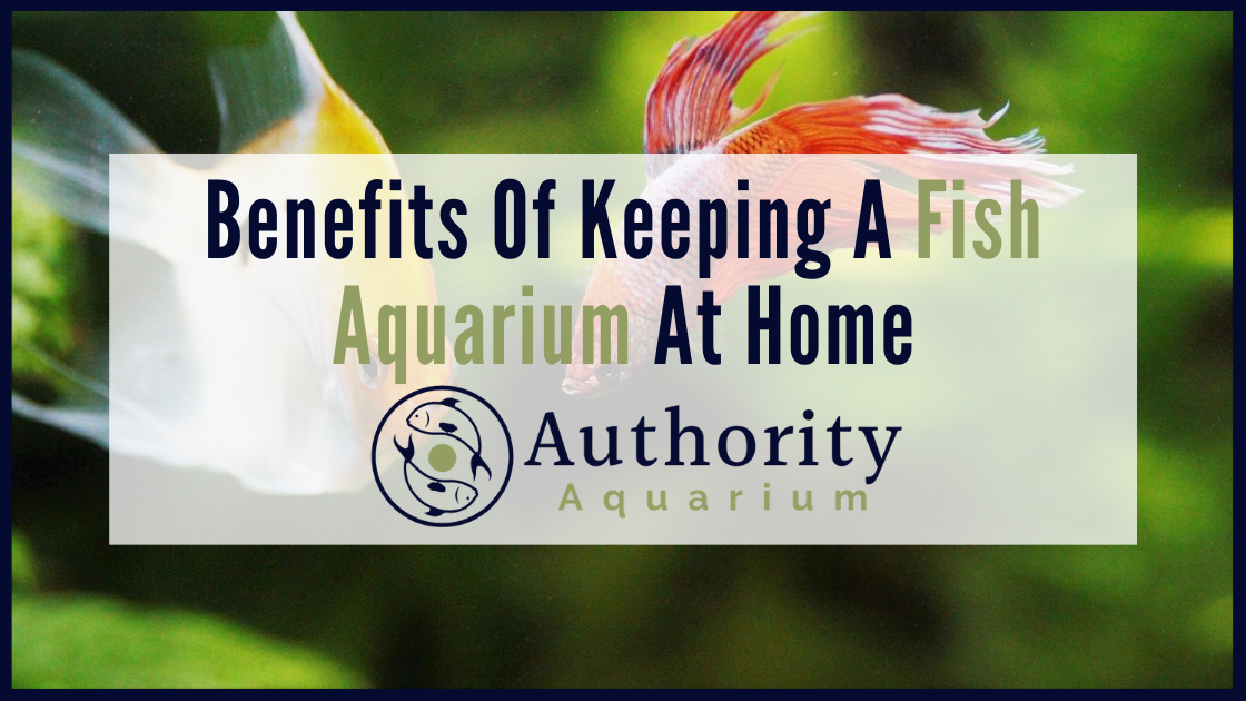 Benefits Of Keeping Fish Aquarium At Home