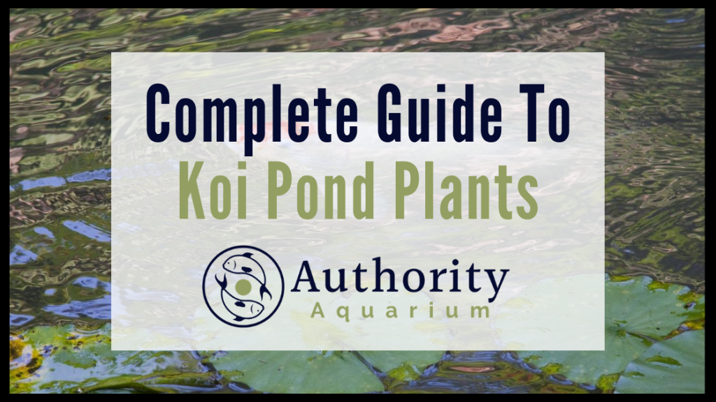 Complete Guide To Koi Pond Plants