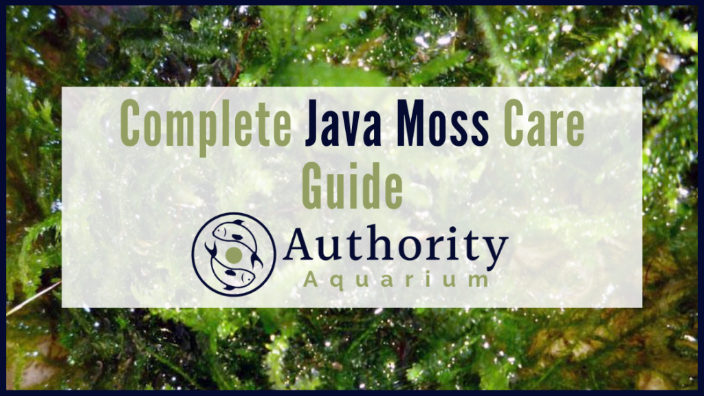 Complete Java Moss Care Guide