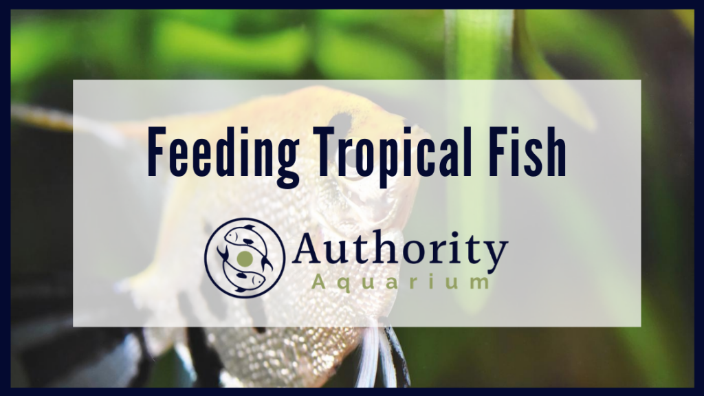Feeding Tropical Fish