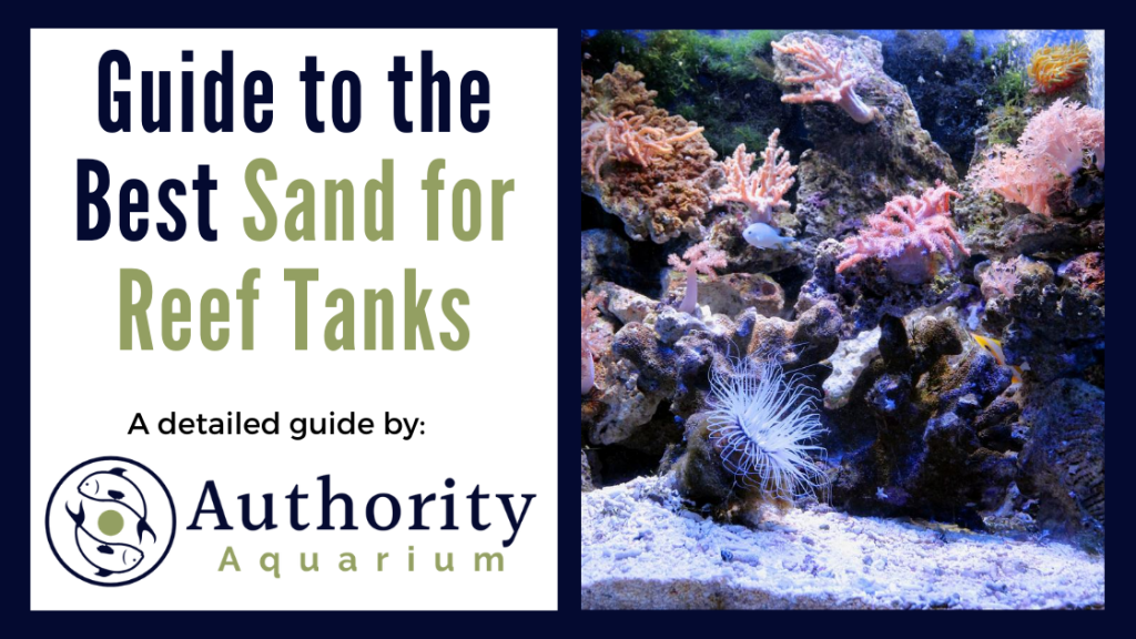 Guide to the Best Sand for Reef Tank