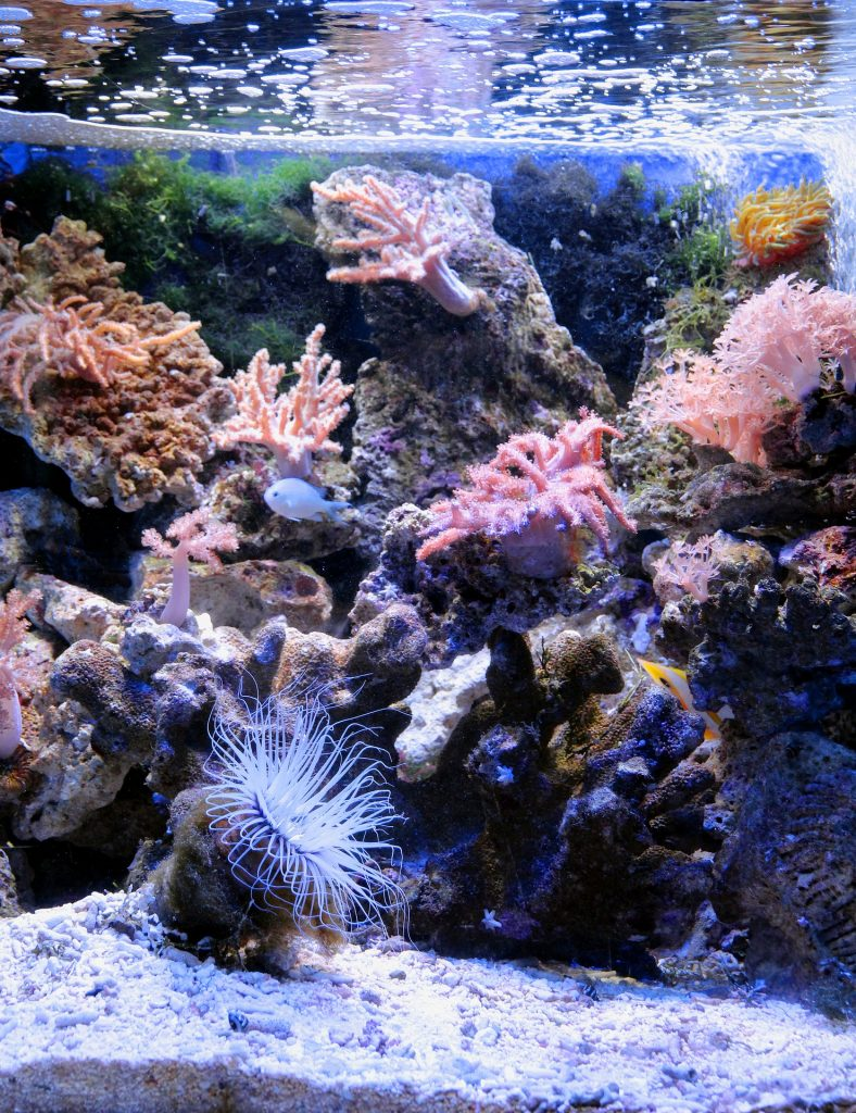 best sand for reef tanks
