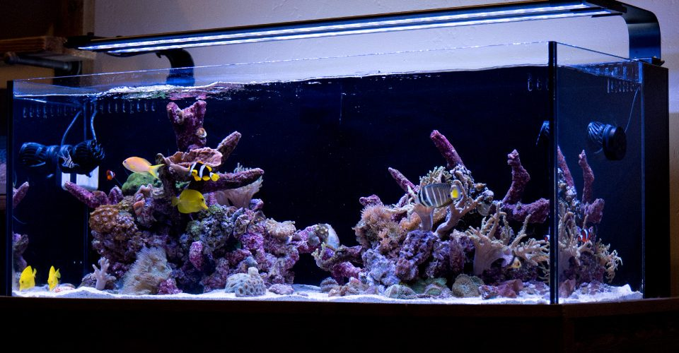 Current USA Orbit Marine Aquarium LED Light