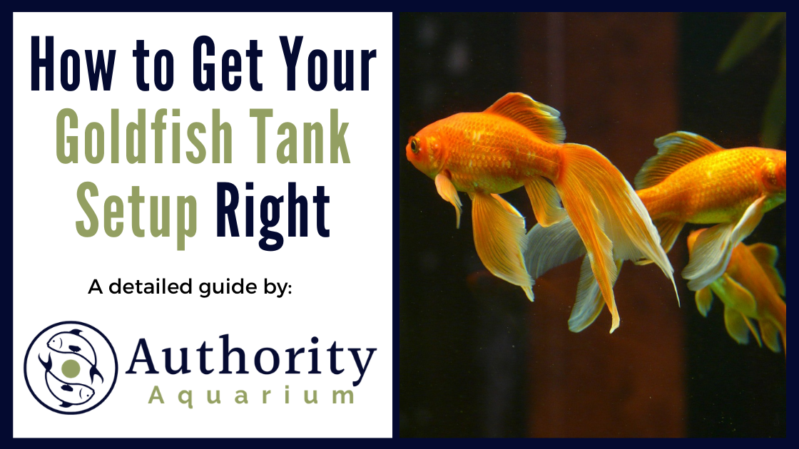 How to Get Your Goldfish Tank Setup Right