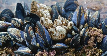 Shellfish Prevented Escaping Global Warming By Wrong Way Migrations