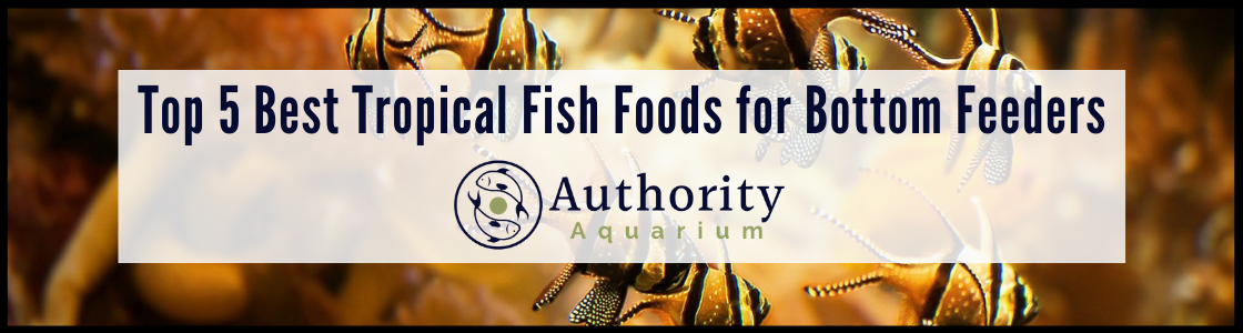 Top 5 Best Tropical Fish Foods for Bottom Feeders