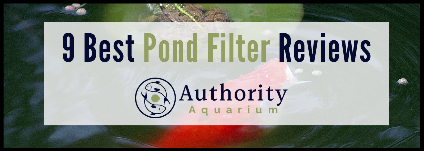 9 Best Pond Filter Reviews