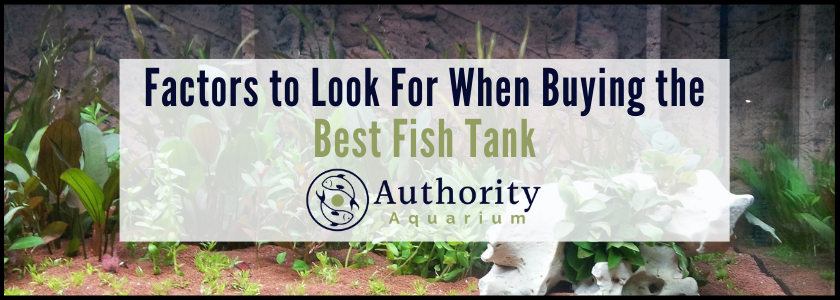 Factors to Look For When Buying the Best Fish Tank