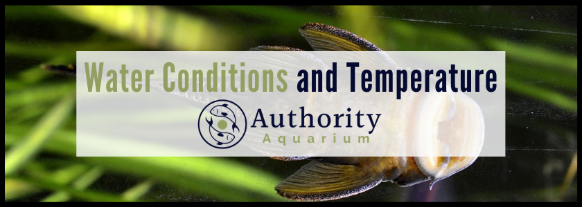 Plecostomus Water Conditions and Temperature