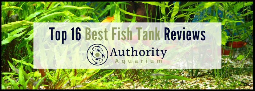 Top 16 Best Fish Tank Reviews